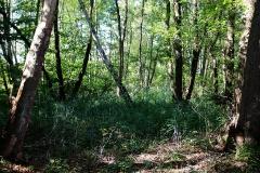 Naturschutzgebiet Rodewaldsches Luch (bei Bamme)