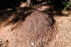 NSG Rodewaldsches Luch (bei Bamme)