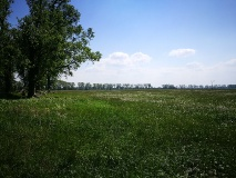 Belziger Landschaftswiesen/Vogelbeobachtungsturm Großtrappe