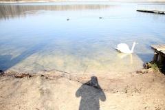 Güterfelder See