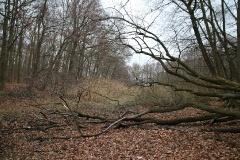 Düstere Teiche in Bornstedt_16