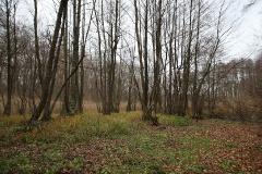 Düstere Teiche in Bornstedt_23
