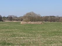 Sehr schöner Spazierweg an den Nuthewiesen in Drewitz