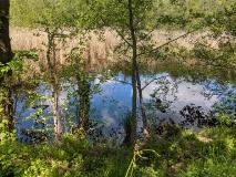 Teichlandschaft am Werderschen Damm