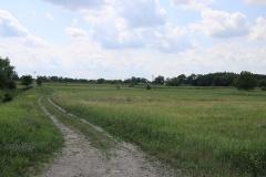 Von Schenkenhorst zur Parforceheide